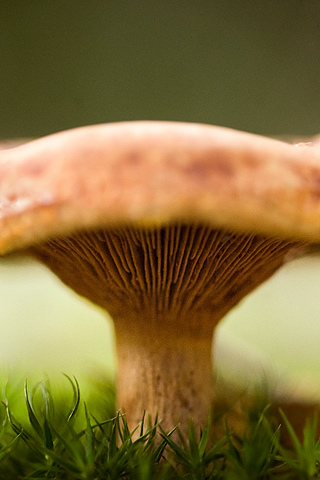 Agaricale - by Hannes R