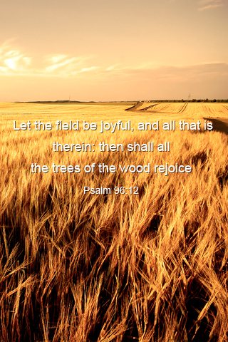 Joyful Field - by Ioswl