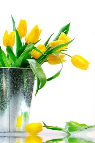 Tulip Bucket - by Ioswl