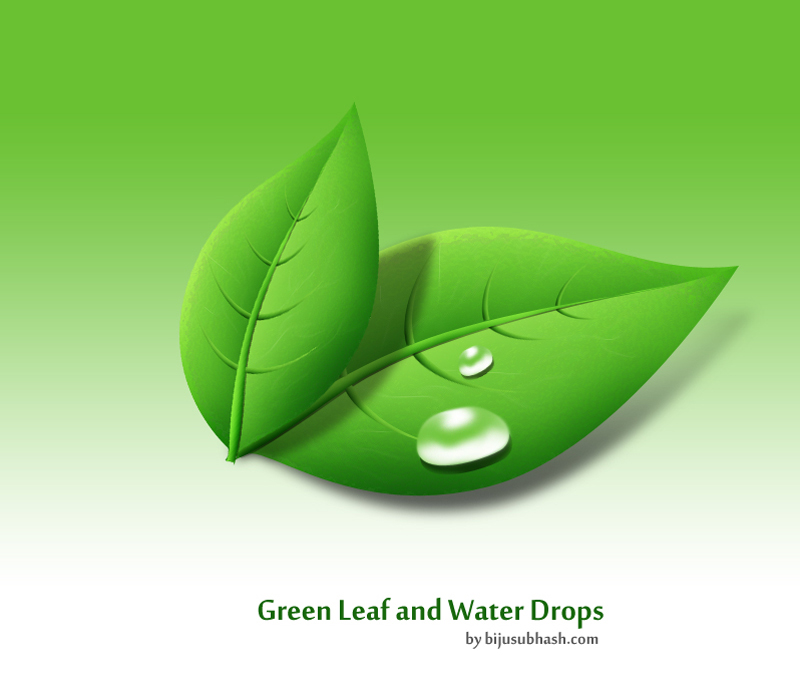 Green Leaf & Water Drops
